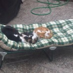 Three of the Gilhooly's cats - enjoying hospitality at Barntown Presbytery, Co. Wexford - all self invited! (Hat tip to JC Ferns)