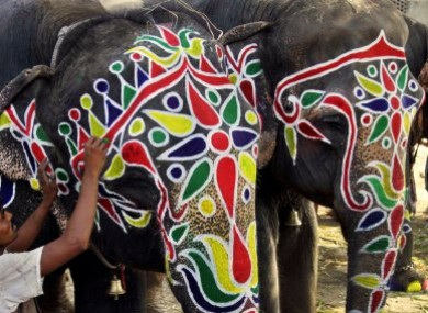 Trunk call: An artist paints an elephant for an annual religious procession in Ahmadabad, India
