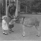 This little girl is being introduced to a donkey at Dublin Zoo in the Phoenix Park. Her mother has given her some bread for the donkey but the little girl has decided to eat it herself.