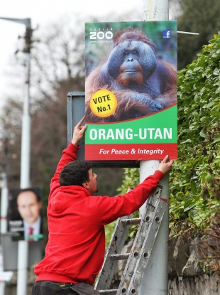 Dublin Zoo hasn't yet commented on whether it will be fielding its Orang-Utan in the Dublin West.