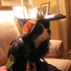 Mairéad Ní Lorcáin's dog could put a spell on you...(via @Bellitum)