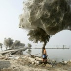 An unexpected side-effect of the 2010 flooding in parts of Sindh, Pakistan, was that millions of spiders climbed up into the trees to escape the rising flood waters; because of the scale of the flooding and the fact that the water took so long to recede, many trees became cocooned in spiders webs. Image: Russell Watkins/National Geographic Photo Contest.