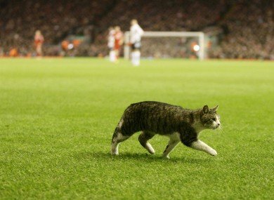 The Anfield Cat heads goalwards at Anfield earlier this month.