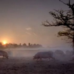 Bizarrely, this ad for Tesco Sausage was banned because it featured pigs roaming in a field. 