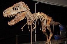 US to seize dinosaur skeleton and return it to Mongolia