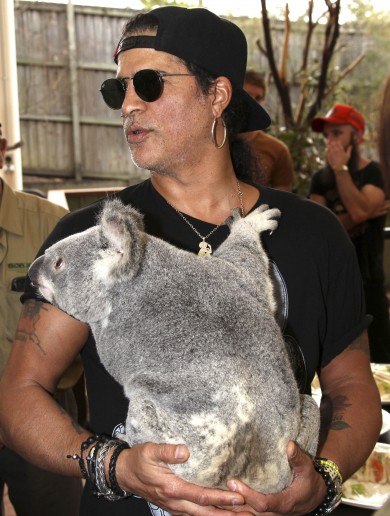 Slash, the Python and Tinkerbell the Koala – a true story