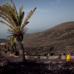 A member of the rescue services gestures as he walks by scorched and burnt trees after a wildfire swept through parts La Gomera, Spain, Sunday, Aug. 12, 2012.  (AP Photo/Andres Gutierrez)