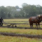 Competitors in the horse ploughing on the opening day of competition. Photo: Laura Hutton/Photocall Ireland