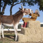 Oklahoma Sam, recognised as the Tallest Donkey (61 inches (155.45 cm) from hoof to withers). The 4-year-old lives in Watsonville, California, USA, where she shares her one acre of land with a Macaw, duck, goose and four cats.  
