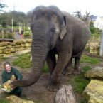 Elephant keeper Donna Murray at Bristol Zoo, presented a birthday cake  to Wendy the elephant in honour of her 40th birthday. For her birthday treat she was given a special cake make of fruit and vegetables and other edible delights, but without candles. (Barry Batchelor/PA Archive/Press Association Images)