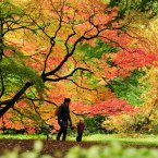 Sarah and 2-year-old Isaac Cromarty enjoy the Autumn colours at Westonbirt Arboretum in Gloucestershire. (PA)