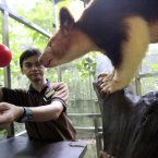 Zoo keeper Rizal Bakar, left, uses a target to lure