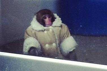 ikea-monkey