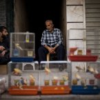 21 October: A Syrian street vendor sits in front of his birds in Shaar district in Aleppo. (AP Photo/ Manu Brabo)
