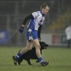 It falls to Monaghan's Dick Clerkin to escort the dog from the pitch.