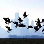 Geese fly over Lake Michigan at Montrose Beach in Chicago. A cool weekend is expected to be followed by warming weather. (AP Photo/Nam Y. Huh)
