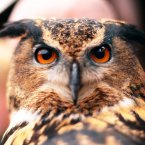 A European Eagle Owl. Who knew?