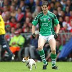 Limerick forward Padraig Browne tries to step in to help by catching the stray dog.
