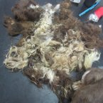 The matted and dirty fur removed from Jin the rescued dog's coat. 