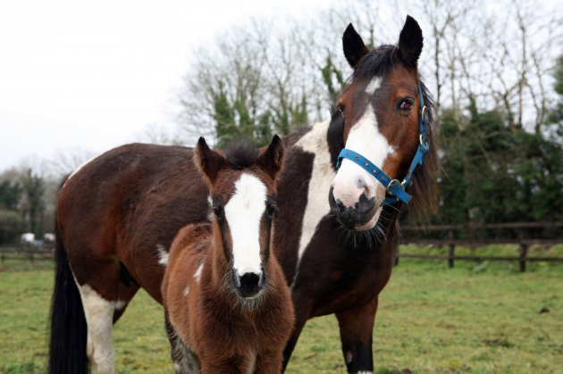 ISPCA foal and mother