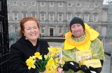 Daffodil Day collections down 50 per cent – but you can still help