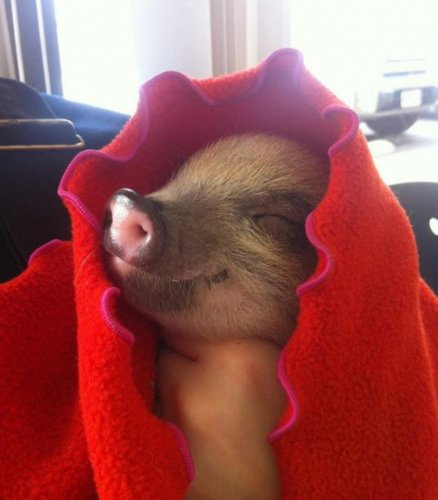 pigletclothes
