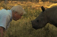 9 reasons why David Attenborough should be reading you a bedtime story