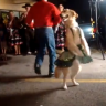 7 of the world�s best dancing dogs