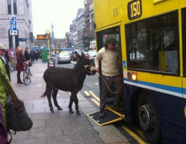 26 foto dall'Irlanda molto divertenti Donkey-4-630x488