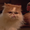 What is better than a dog and cat play fighting in slow motion…